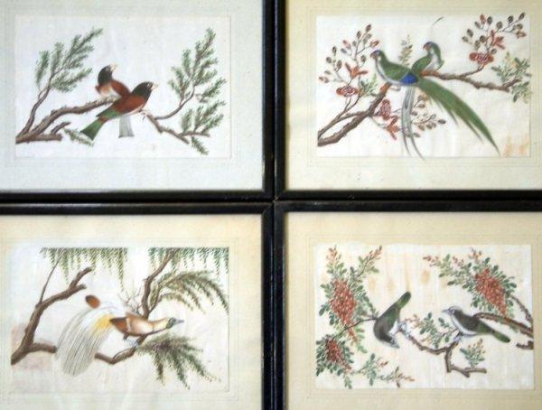 2679: Chinese School  four gouaches Exotic birds 6 x 9i
