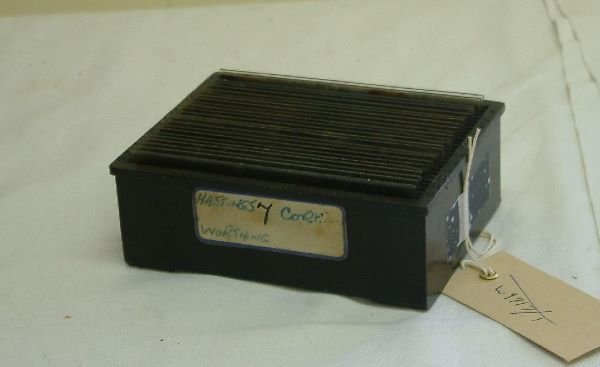 219F: A collection of twenty-four stereoscopic negative