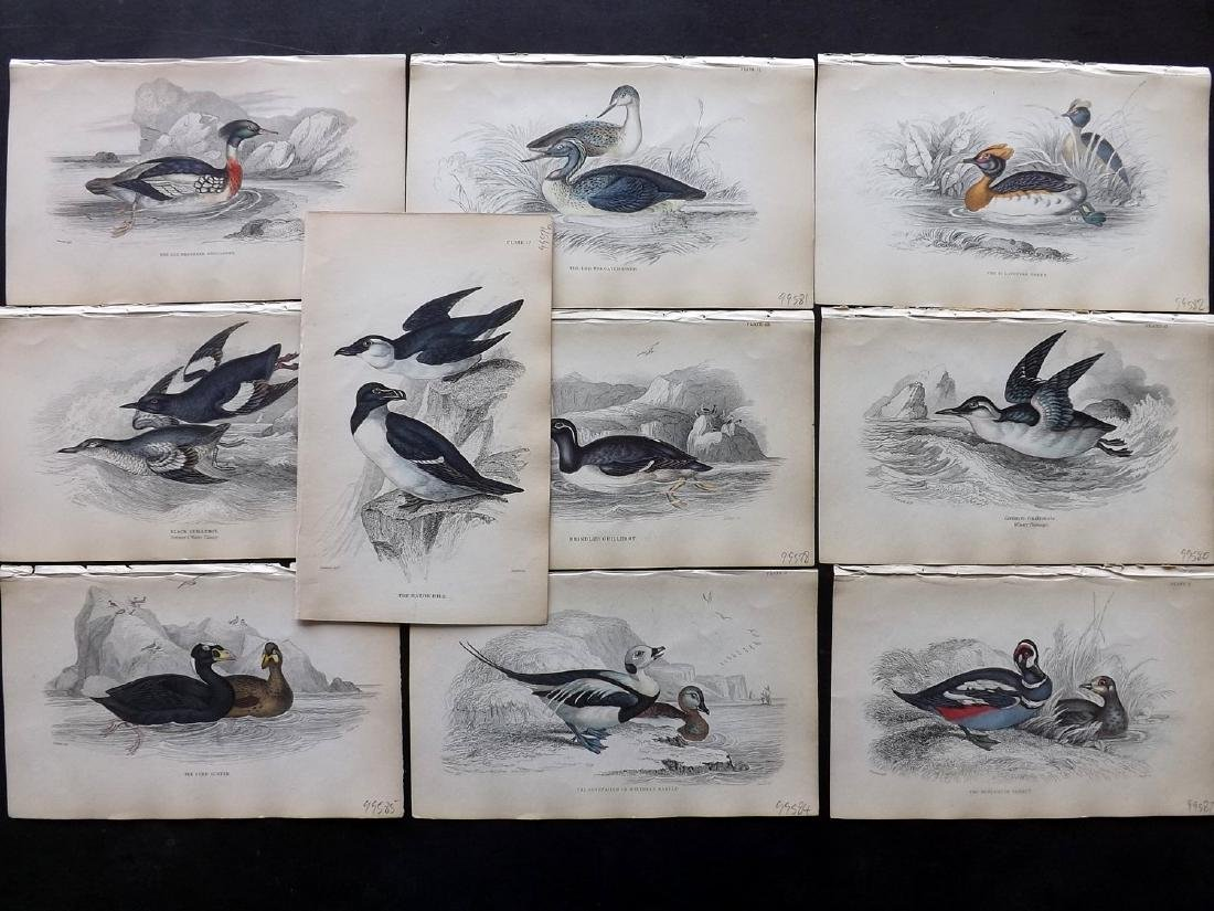 Jardine, William C1840 Lot of 10 HC Bird Prints