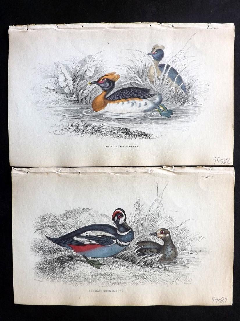 Jardine, William C1840 Lot of 10 HC Bird Prints - 2