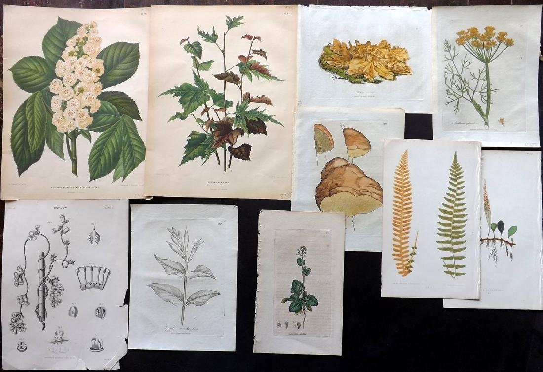 Botanical Prints 19th Century Lot of 10