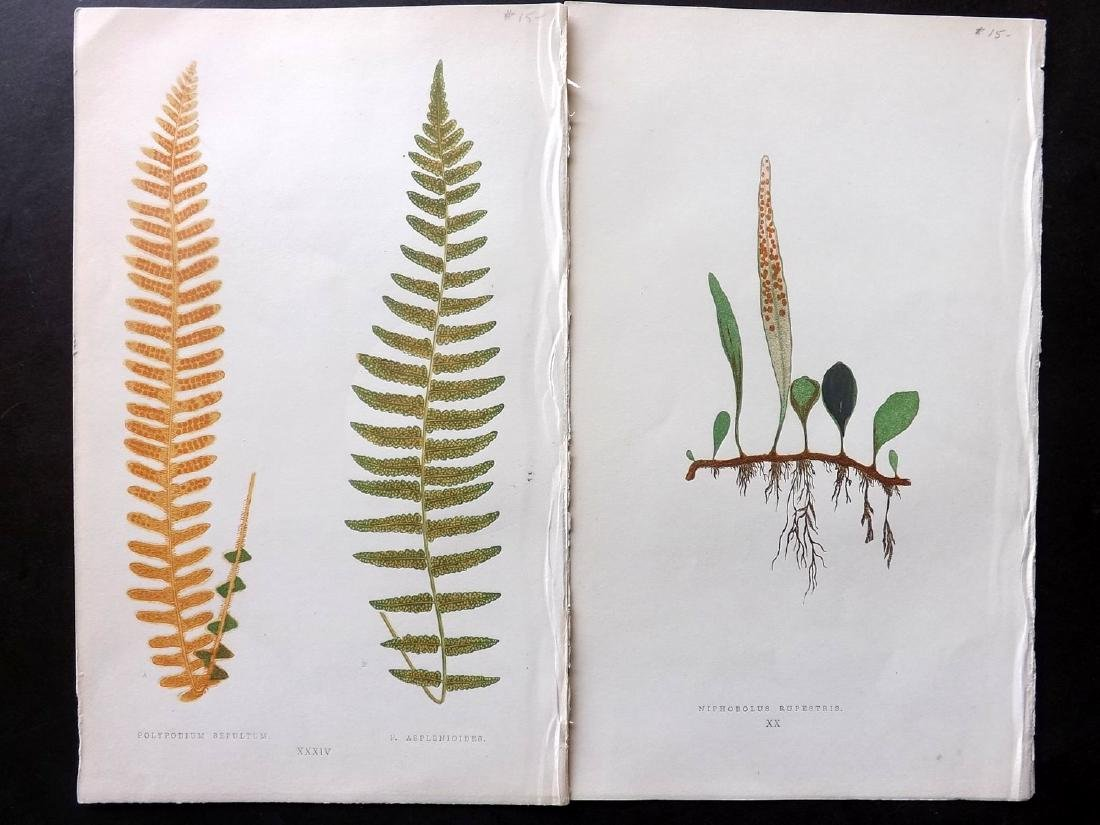 Botanical Prints 19th Century Lot of 10 - 2