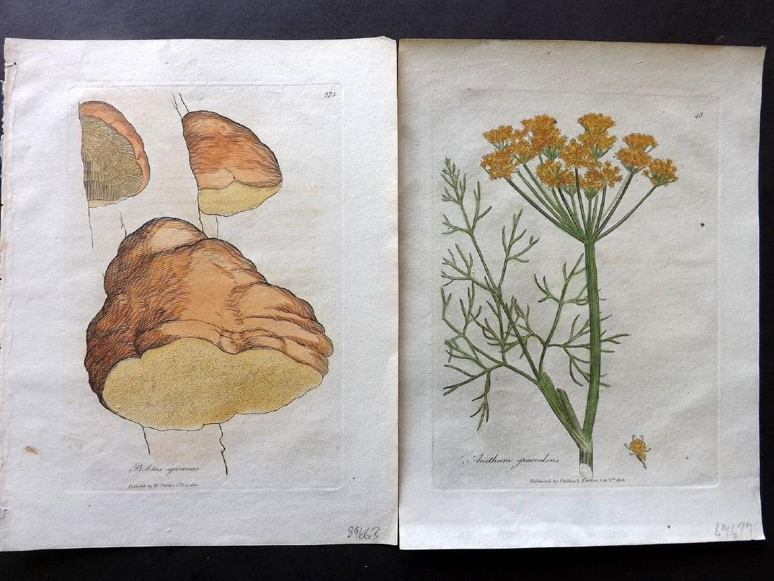 Botanical Prints 19th Century Lot of 10 - 3