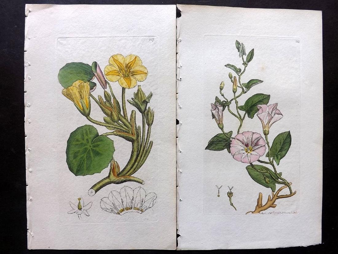 Botanical Prints 19th Century Lot of 15 - 2