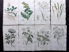Cox Pub 1822 Lot of 8 HCol Botanical Prints