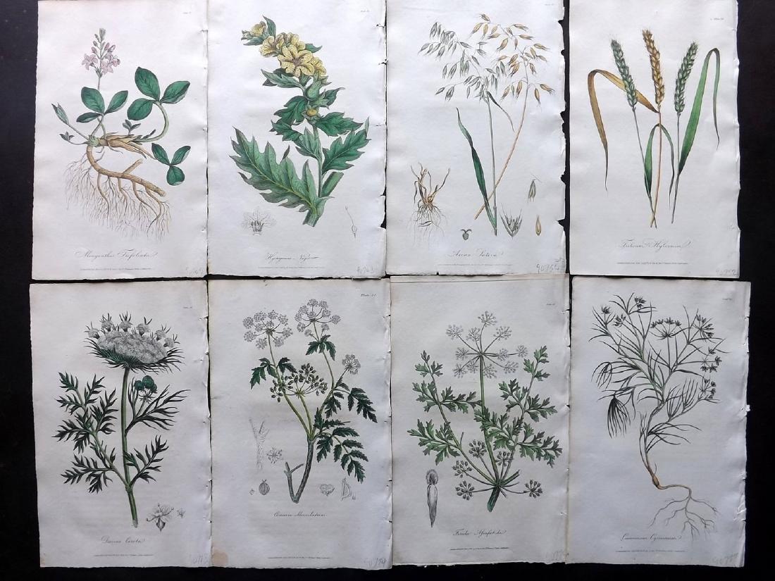 Cox (Pub) 1822 Lot of 8 HCol Botanical Prints