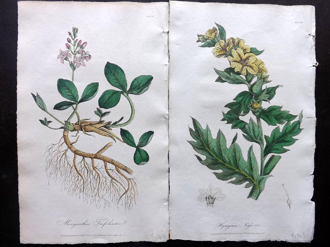 Cox (Pub) 1822 Lot of 8 HCol Botanical Prints - 2