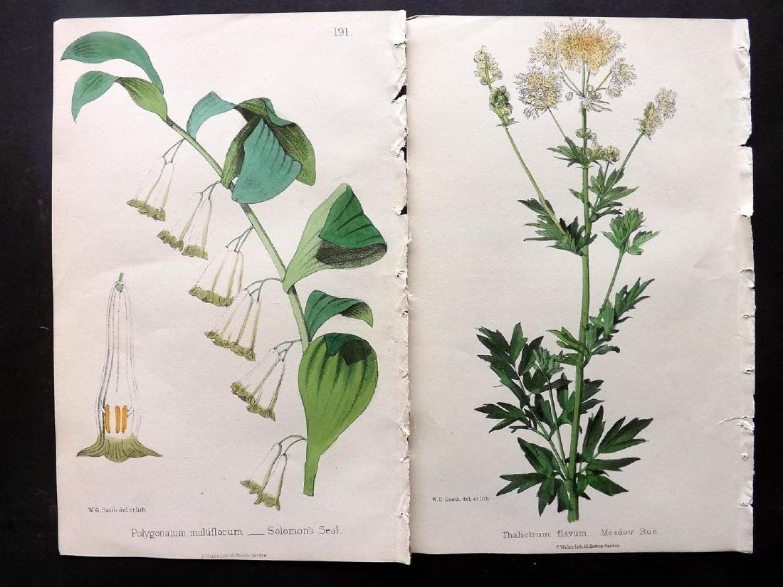 Hogg & Johnson C1870 Lot of 10 HCol Botanical Prints - 2
