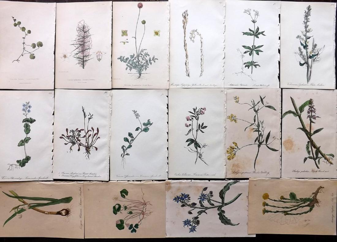 Hogg & Johnson C1870 Lot of 16 HCol Botanical Prints
