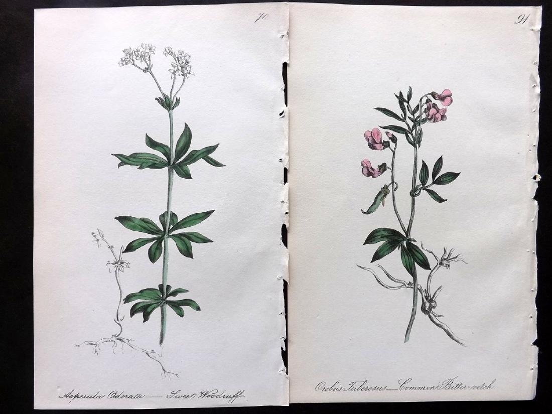 Hogg & Johnson C1870 Lot of 16 HCol Botanical Prints - 2