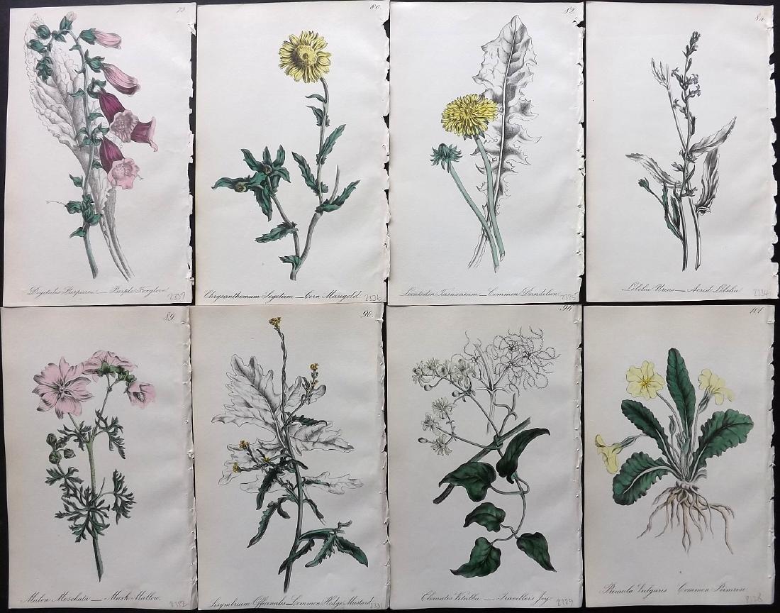 Hogg & Johnson C1870 Lot of 8 HCol Botanical Prints