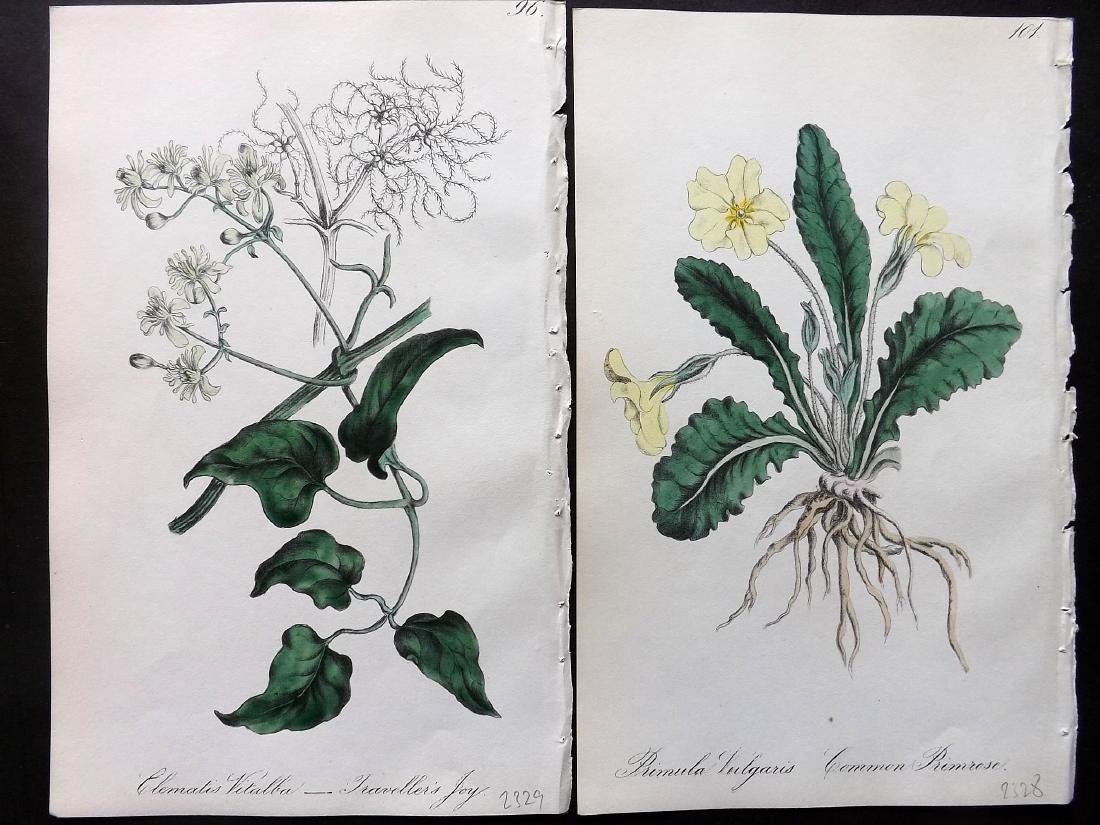 Hogg & Johnson C1870 Lot of 8 HCol Botanical Prints - 2