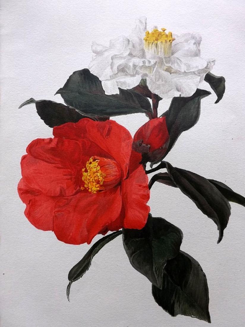 Moon, H. G. 1903 - 3 Botanicals. Rose, Peony, Camellias - 2