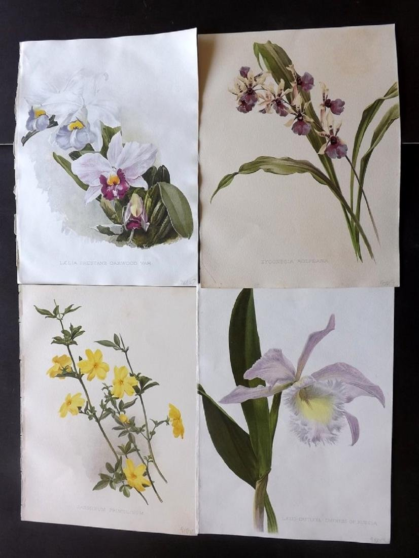 Moon, H. G. 1903 Group of 4 Botanical Prints. Orchids