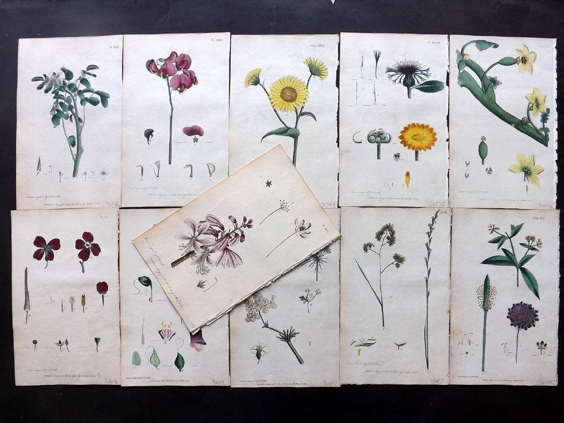 Nodder, Frederick & Martyn, Thomas 1794 Lot of 11 HC