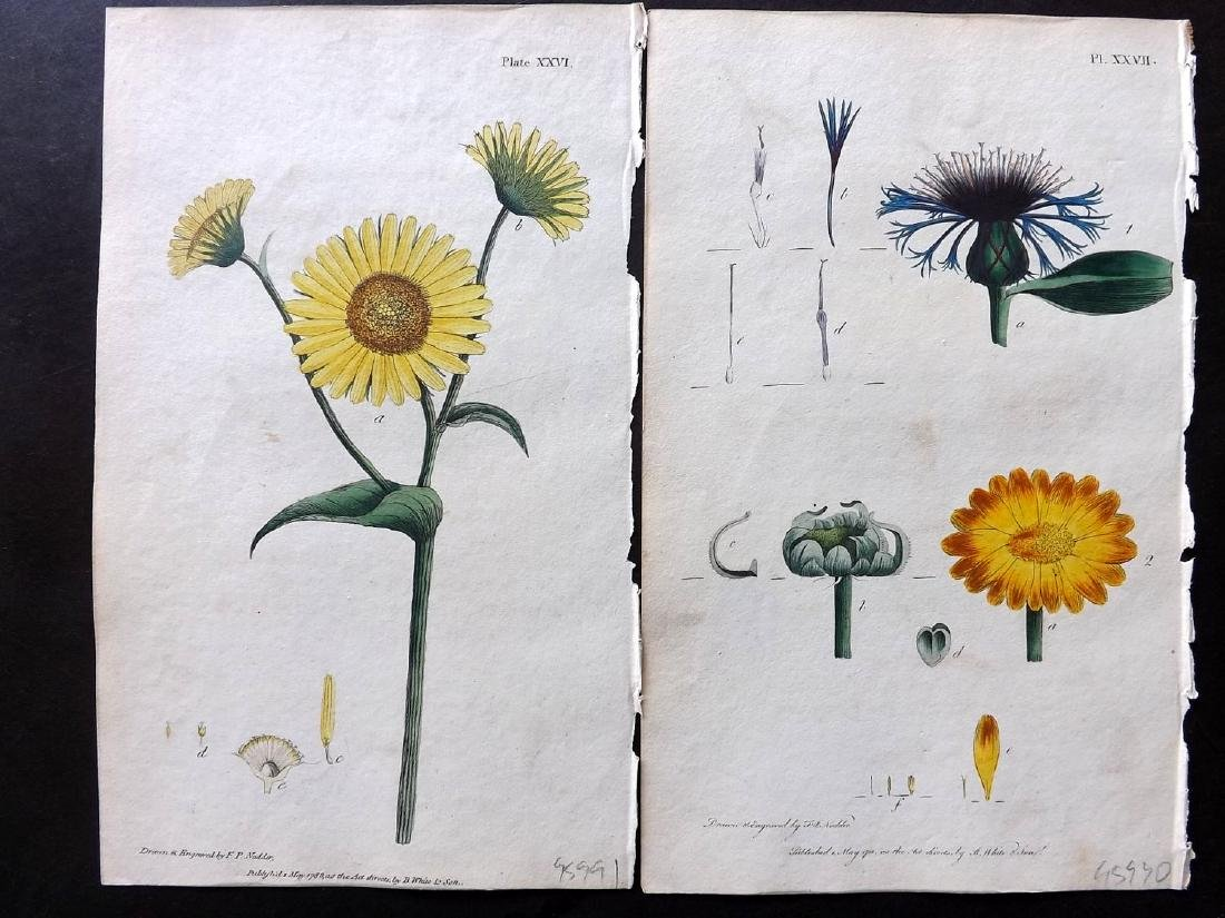 Nodder, Frederick & Martyn, Thomas 1794 Lot of 11 HC - 2