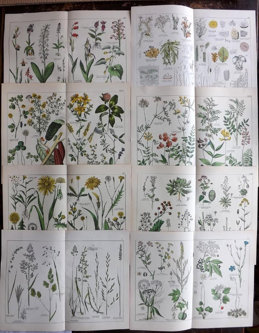 Schubert, Gotthilf Heinrich von C1880 Lot of 8 Prints