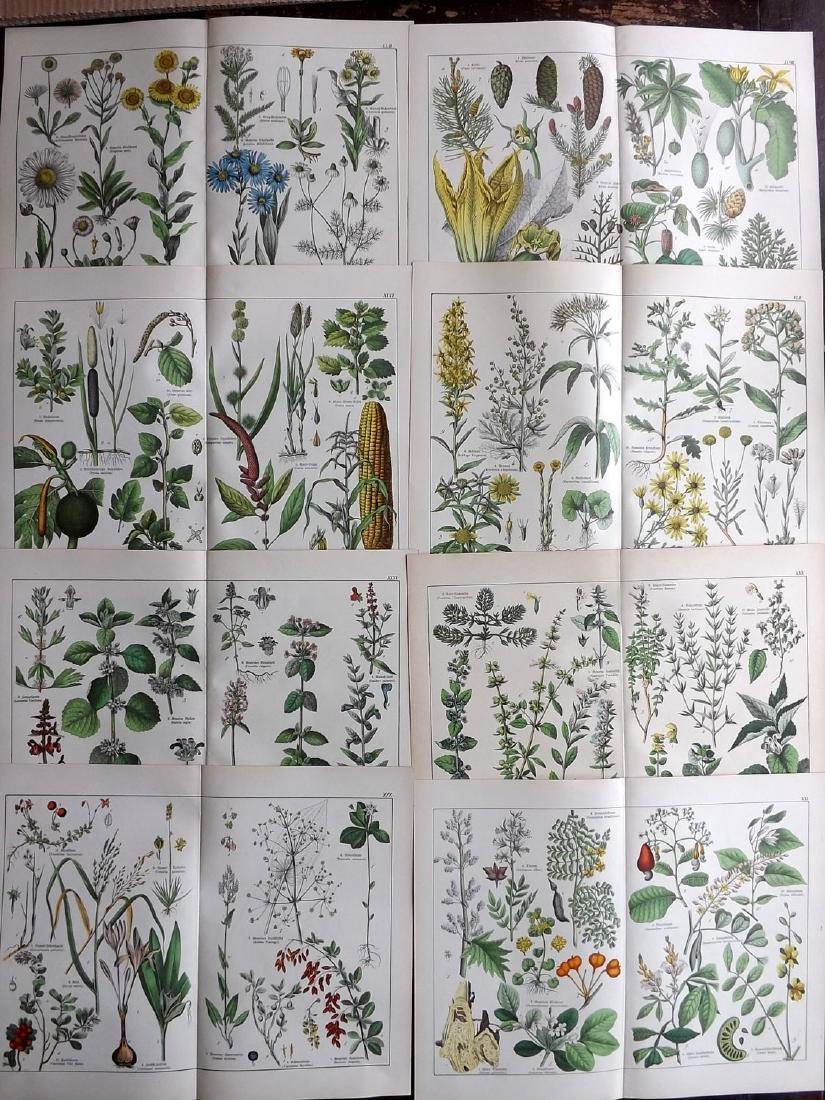 Schubert, Gotthilf Heinrich von C1880 Lot of 8 Prints