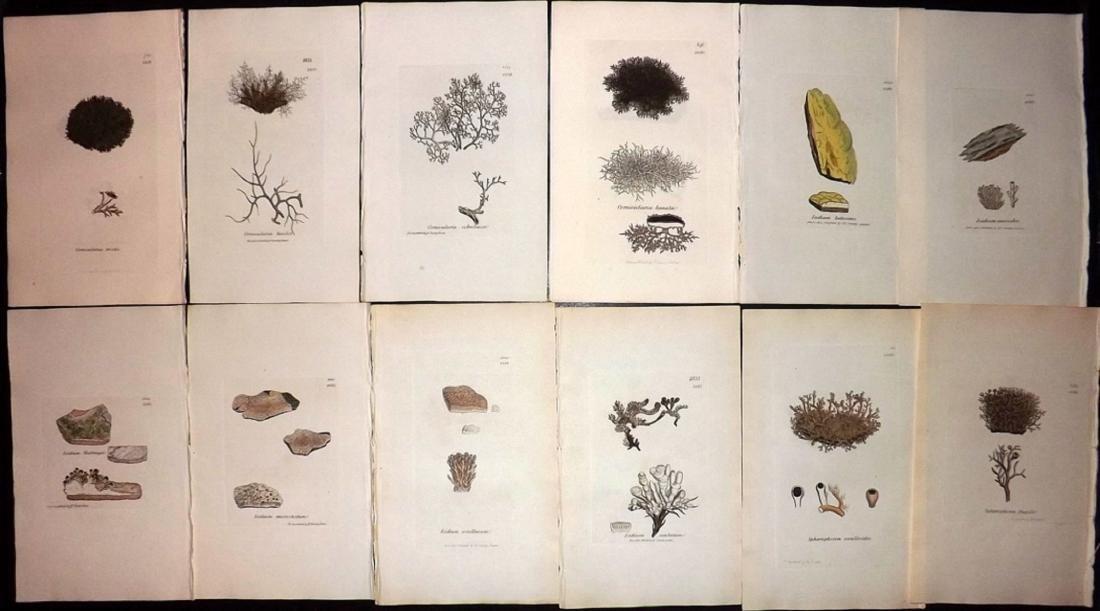 Sowerby, James 1846 Lot of 12 HC Aquatic Plants