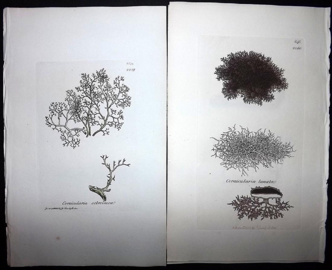 Sowerby, James 1846 Lot of 12 HC Aquatic Plants - 2