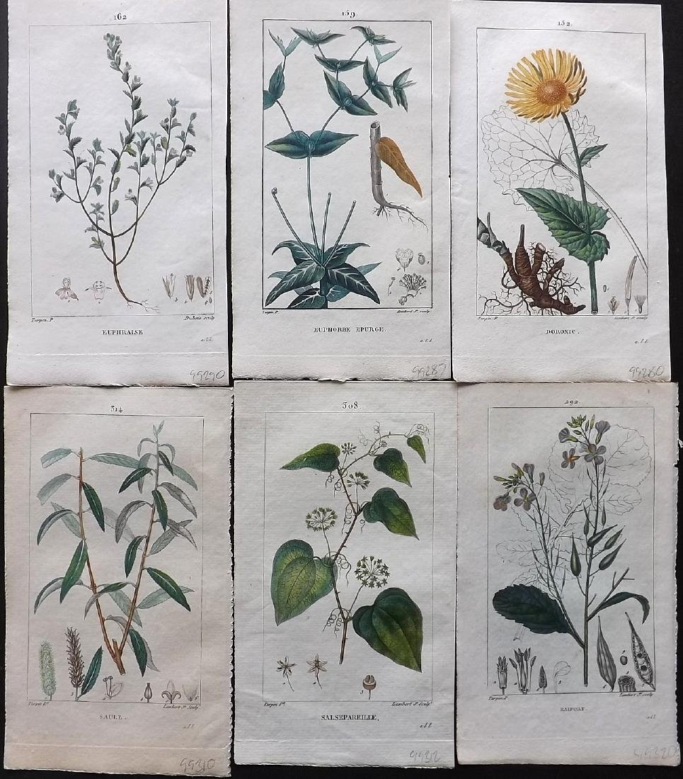 Turpin, Pierre C1815 Group of 6 HC Botanical Prints