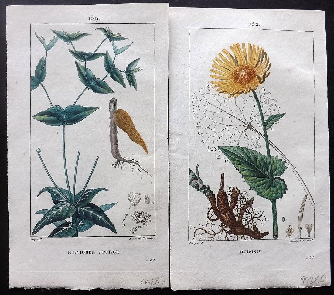 Turpin, Pierre C1815 Group of 6 HC Botanical Prints - 2