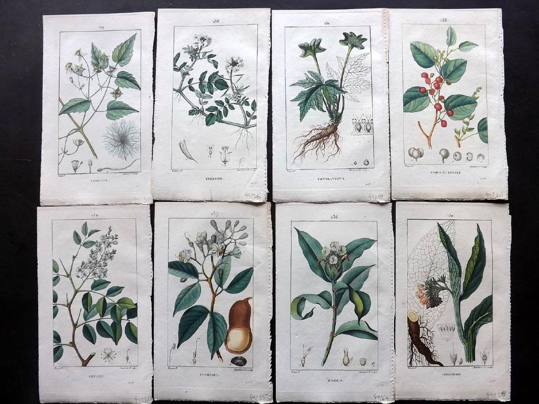 Turpin, Pierre C1815 Lot of 8 HC Botanical Prints
