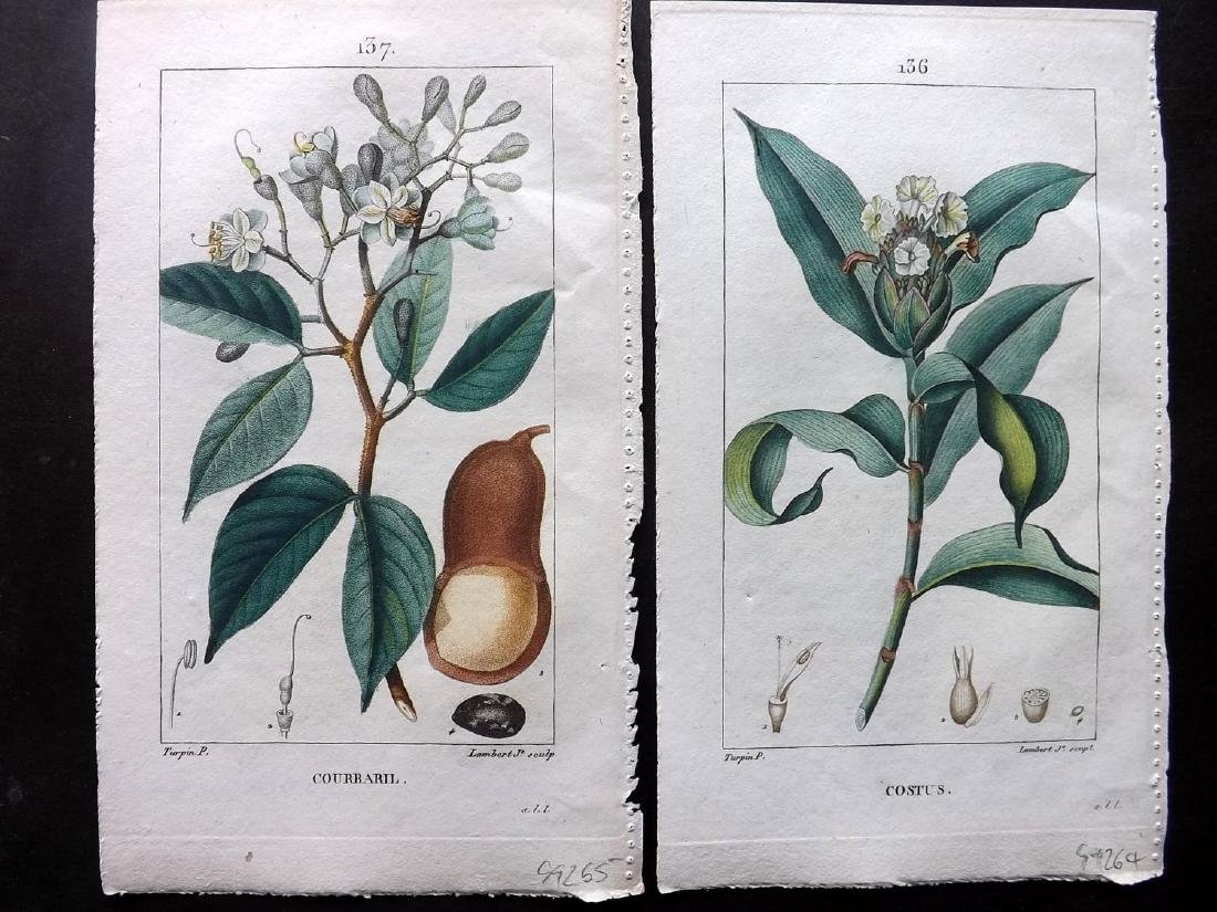 Turpin, Pierre C1815 Lot of 8 HC Botanical Prints - 2