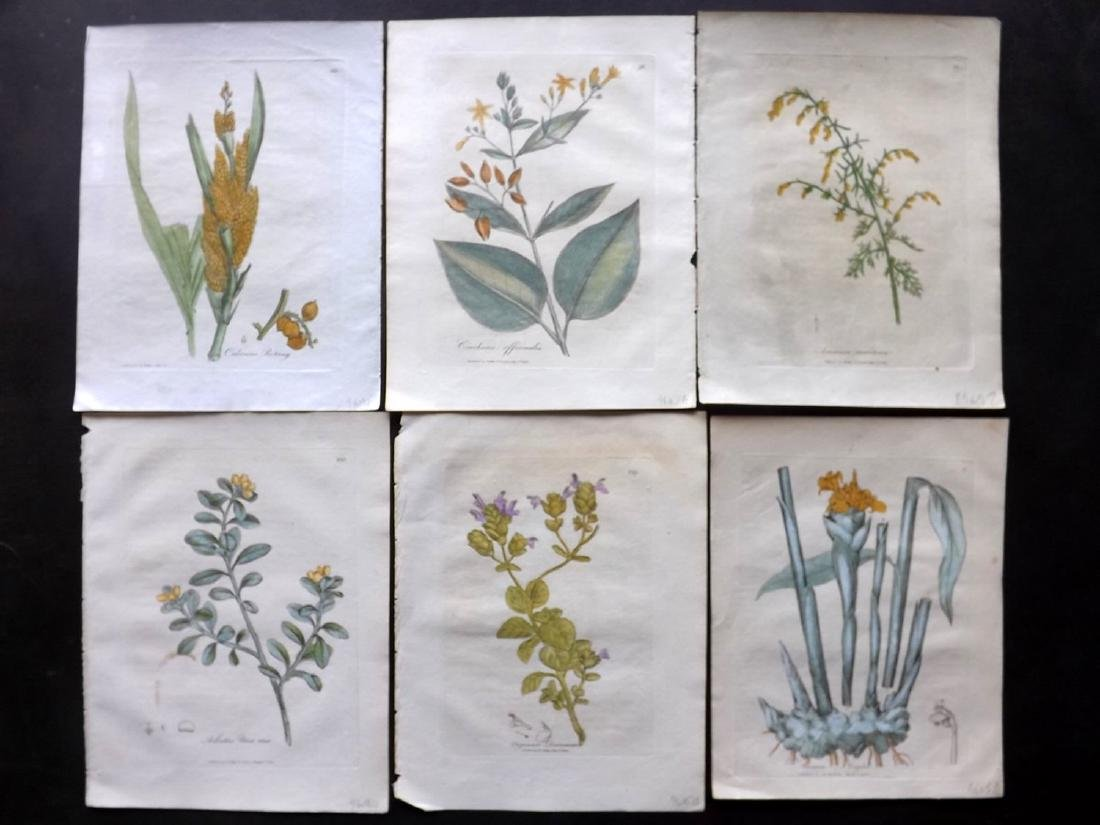 Woodville, William 1810 - 6 HC Botanical Prints
