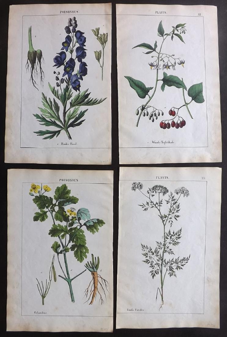 Yonge, Charlotte Mary 1863 - 4 Prints. Poisonous Plants