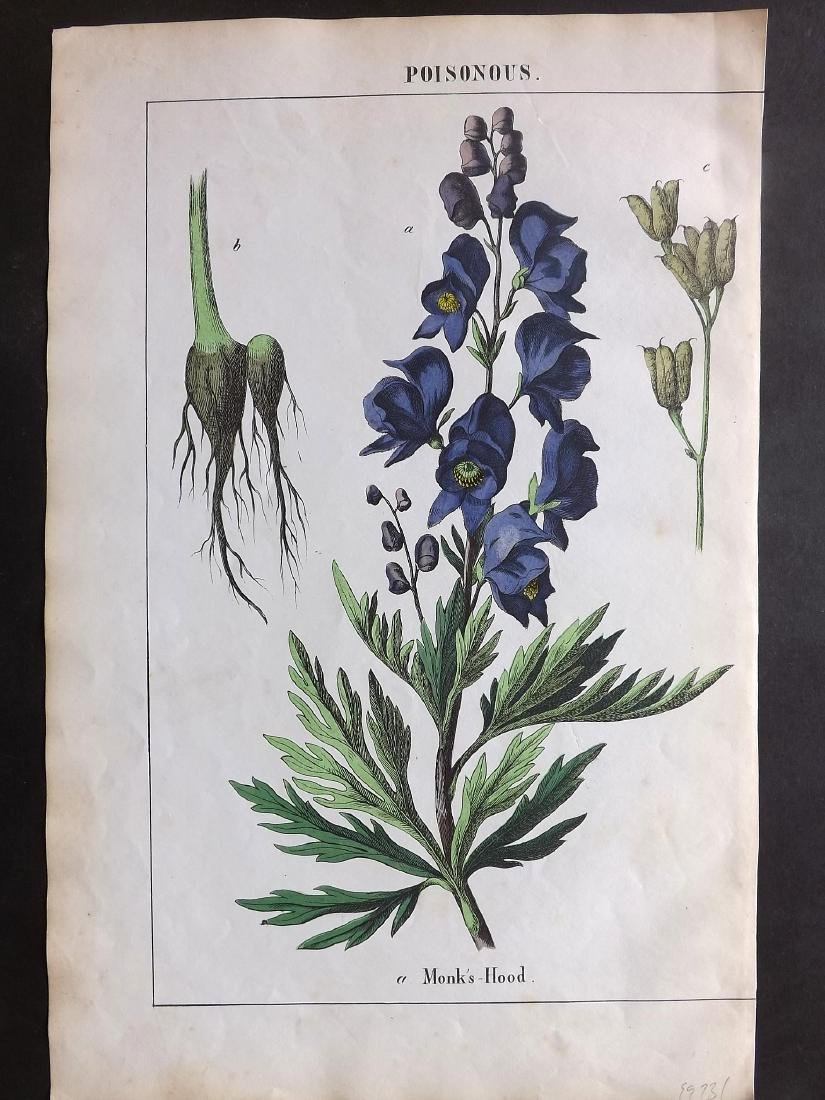 Yonge, Charlotte Mary 1863 - 4 Prints. Poisonous Plants - 2