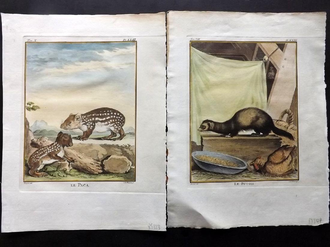 Buffon, Comte de C1770 Lot of 8 HC Prints. First Ed - 2