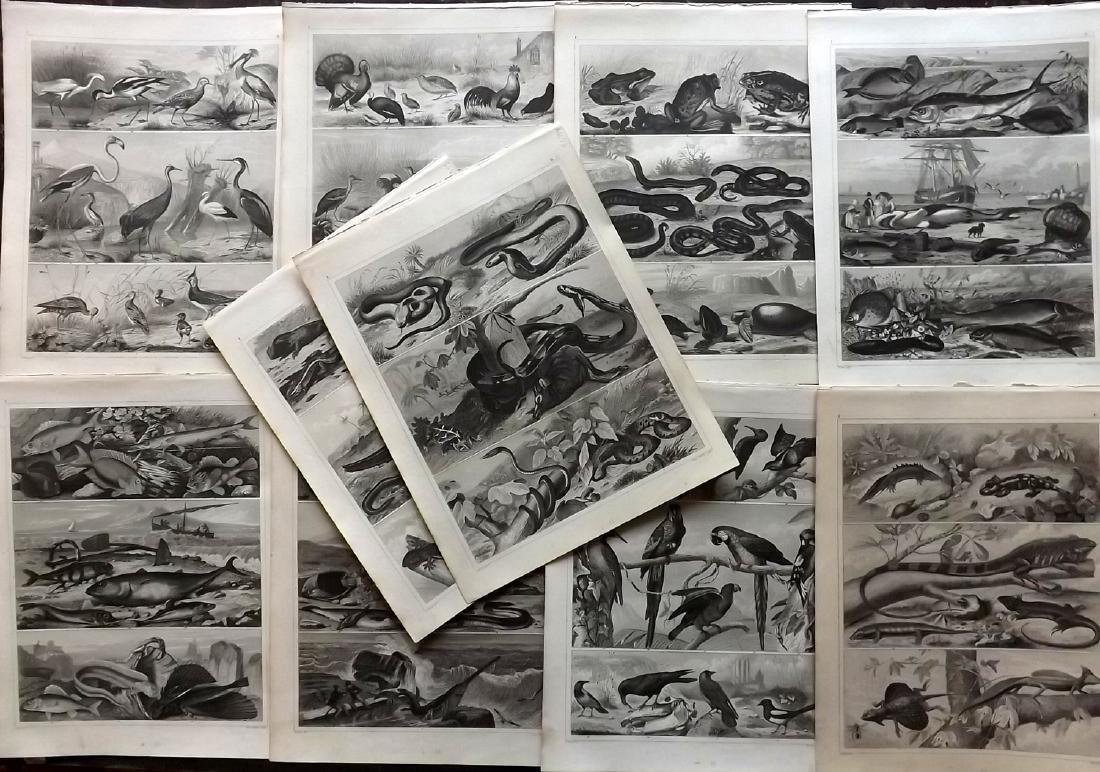 Heck, Johann Georg 1849 - 10 Natural History Prints