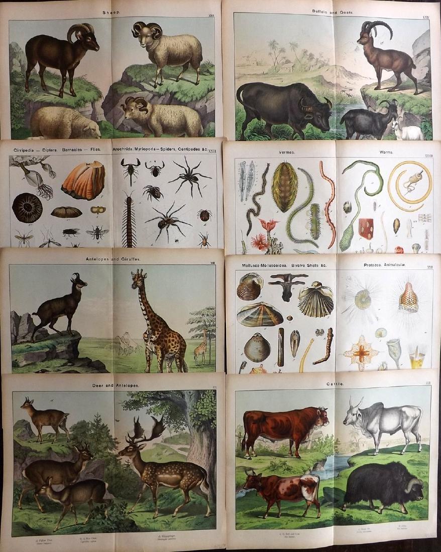 Schubert, Gotthilf Heinrich von 1889 Lot of 8 LG Prints