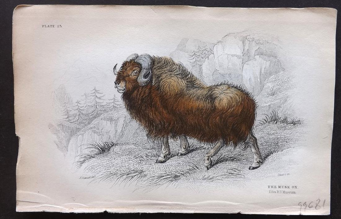 Jardine, William C1840 Group of 5 HC Cattle Prints - 2