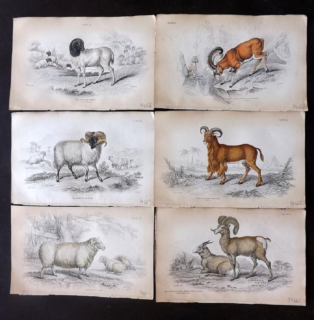 Jardine, William C1840 - 6 HC Prints. Sheep Goats