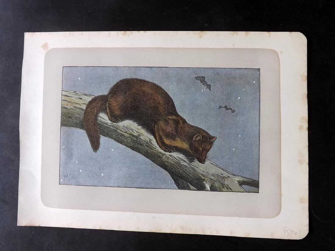 Mahler, P. 1907 Lot of 10 Prints. Rodents, Rabbits - 2