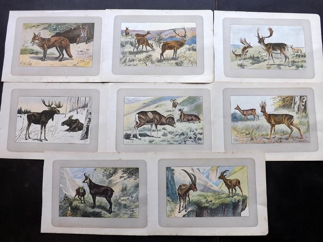 Mahler, P. 1907 Lot of 8 Antique Prints. Deer etc