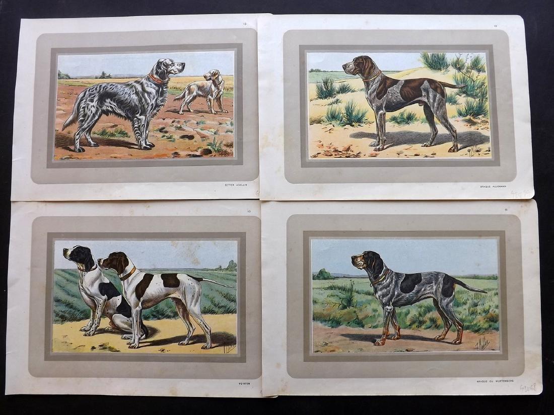 Mahler, P. 1931 Group of 6 Dog Prints