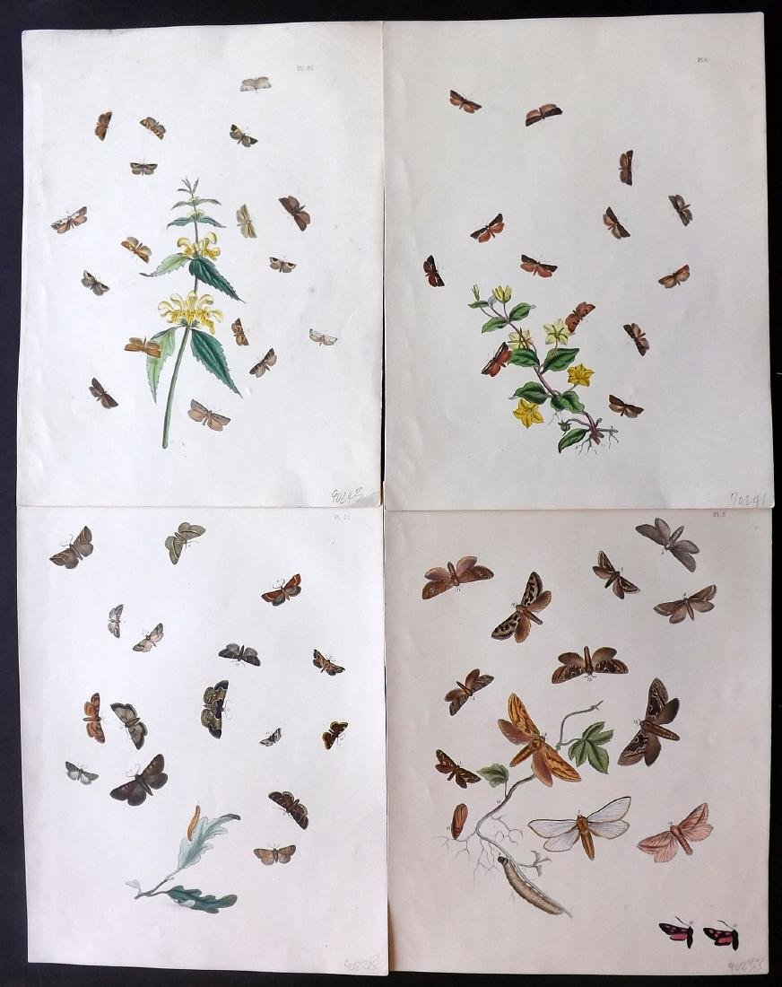 Westwood, John Obadiah 1887 Group of 6 Butterfly Prints