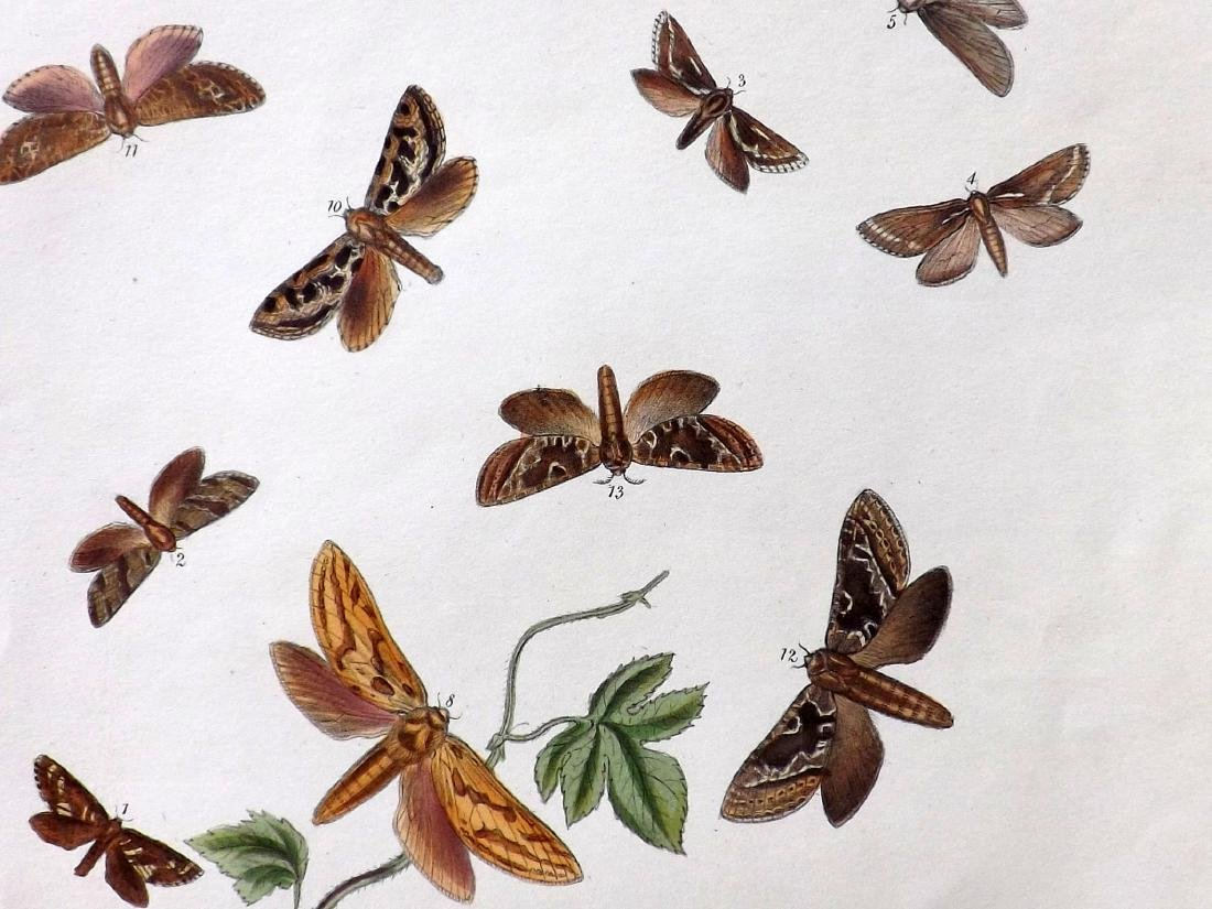 Westwood, John Obadiah 1887 Group of 6 Butterfly Prints - 2