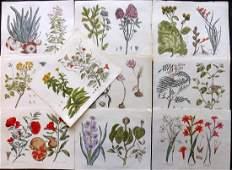 Green Thomas 1820 Lot of 10 HCol Botanical Prints