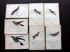 Jardine, William C1840 Lot of 12 HC Hummingbird Prints