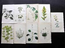 Hogg  Johnson C1870 Lot of 9 HCol Botanical Prints