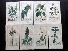 Turpin Pierre C1815 Lot of 15 HCol Botanical Prints