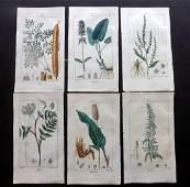 Turpin Pierre C1815 Lot of 6 HCol Botanical Prints