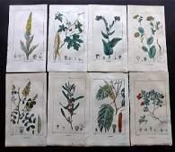 Turpin Pierre C1815 Lot of 8 HCol Botanical Prints