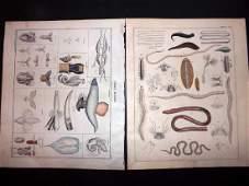 Oken Lorenz 1843 Group of 3 Hand Col Sea Life Prints