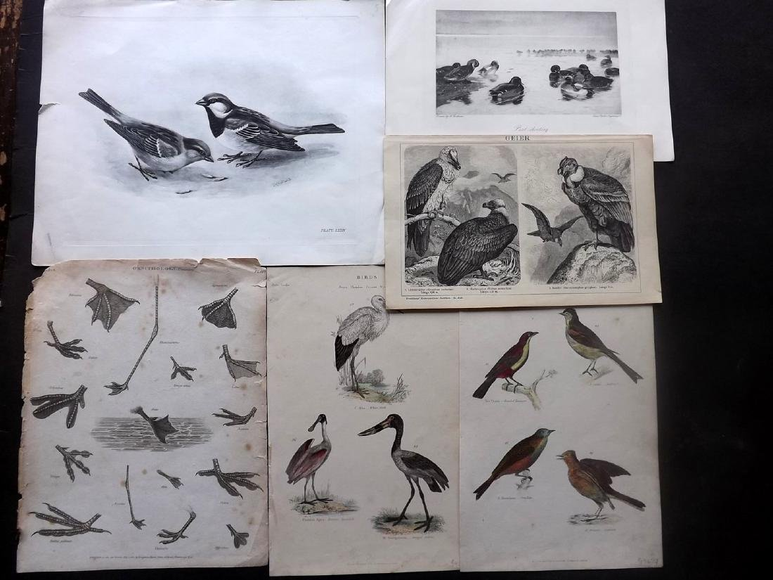 Birds 19th Century Mixed Lot of 6 Antique Prints