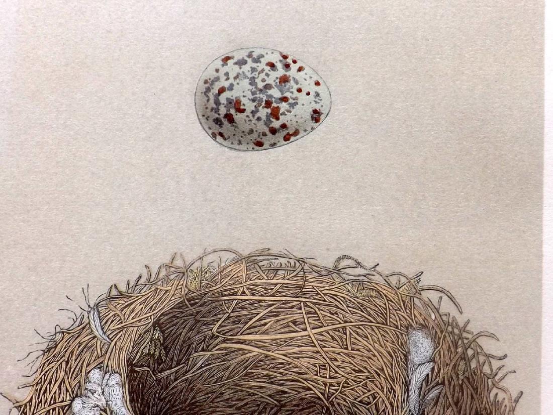 Morris, Francis 19th Cent. Lot of 8 Bird Nest & Egg - 2